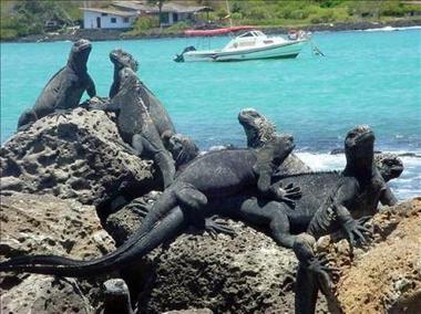 2582451773-encuentran-nuevos-nidos-ave-peligro-extincion-islas-galapagos